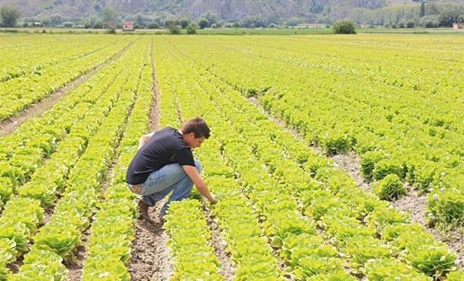 Agricoltura, ecco ciò che serve per fronteggiare i contraccolpi da Coronavirus
