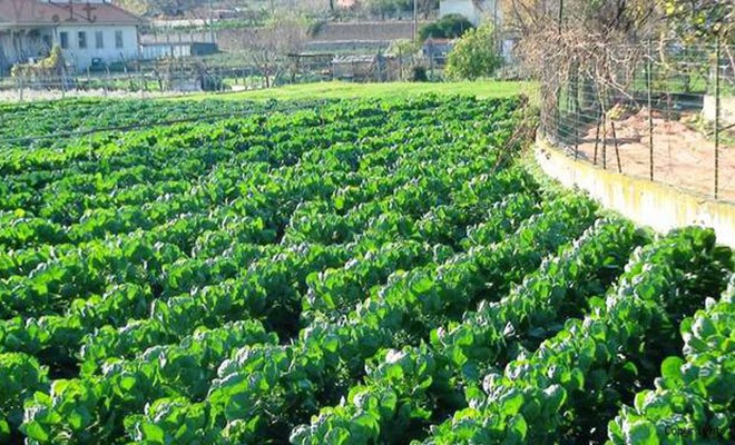 La Regione per le imprese agricole